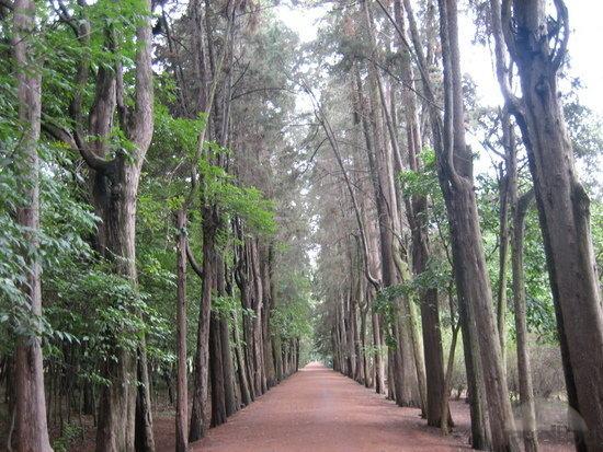 Lugares para correr en ciudad de m xico soy maratonista for Viveros coyoacan